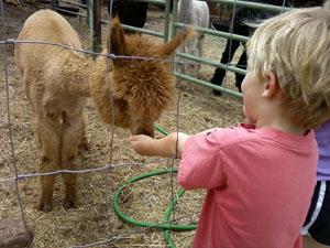 boy-alpaca