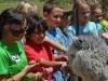 group-alpaca